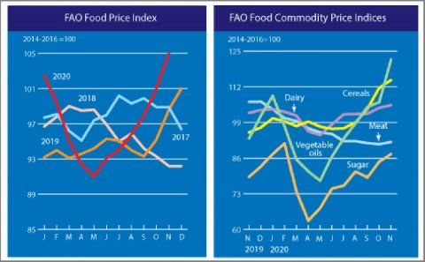 FAO Food Price Index registered a sharp rise in November to its highest level in nearly six years