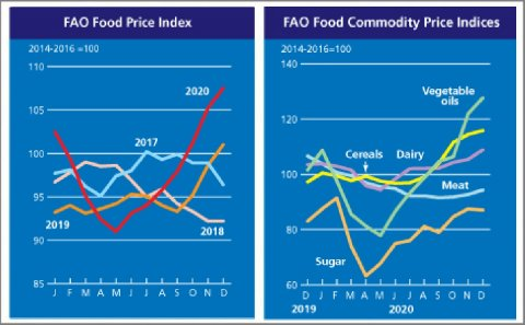 FAO Food Price Index hits a three-year high in 2020, following additional gains in December