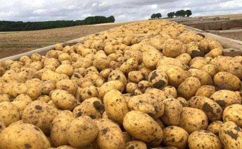Francia: 'Un inicio de campaña centrado en las exportaciones para el mercado de la patata de conservación'