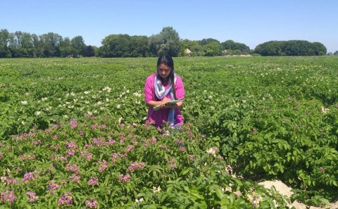 HZPC: From Seed potato to Seed: Optimizing the germination of TPS