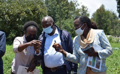 Kenya seeks Sh656m for potato seed study