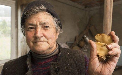 La polilla de la patata se extiende por la costa desde parroquias de Carballo y a Laracha