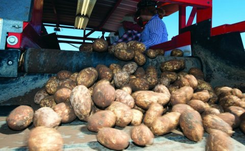National Potato Council Applauds Reintroduction of Farm Workforce Modernization Act