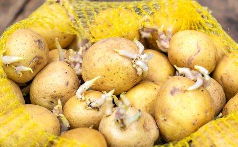 Cómo conservar las patatas y que duren más tiempo