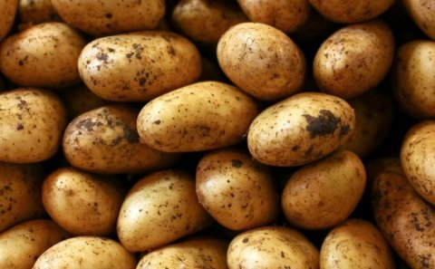 The National Potato Council of Kenya and Corteva Agriscience have embarked on plans to increase yield among smallholder farmers from 7 tonnes to 20 tonnes per hectare.