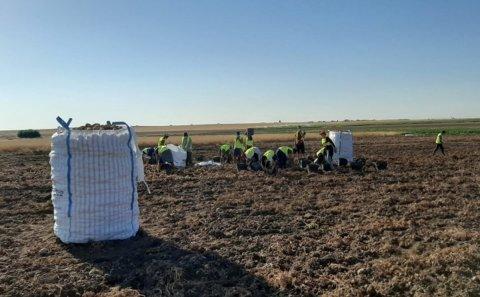 La producción de patata en España, durante 2020, cae un 5,1% hasta situarse en los 2,1 millones de toneladas