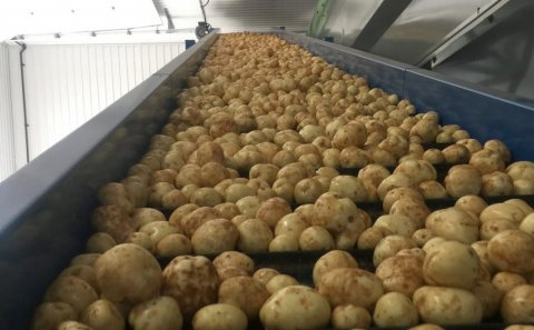 Canadian Potato Crop and Harvest Update September 18, 2020