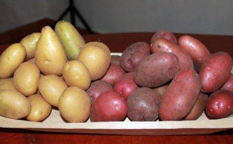 Honduras: Evaluarán de siete variedades de semilla papa